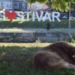 Со два стационари Гостивар го решава проблемот со кучиња скитници